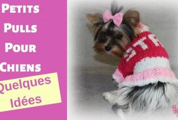 Tricot, Pulls pour petits chiens, quelques idées