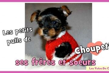 Passion Tricot: Les petits pulls chiot de Choupette