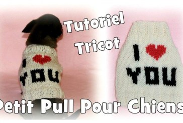 Tutoriel Tricot: Pull I Love You pour petits chiens Chihuahuas ou Yorkshires