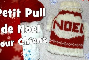 Petit Pull de Noel pour chiens