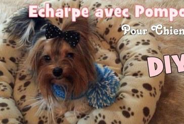 DIY Tricot: Echarpe avec Pompon pour chiens