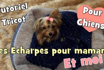 Tutoriel Tricot pour chiens: Des écharpes pour maman et moi!