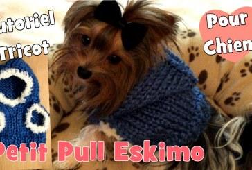 Tutoriel: Comment tricoter un Pull Eskimo pour petits chiens?