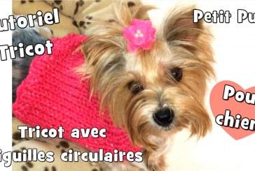 Tutoriel Tricot: Pull pour chiens avec aiguilles circulaires