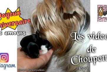 Joyeux anniversaire mes bébés – Compil Instagram de Choupette