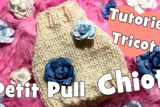 DIY Tricot: Petit Pull pour Chiot