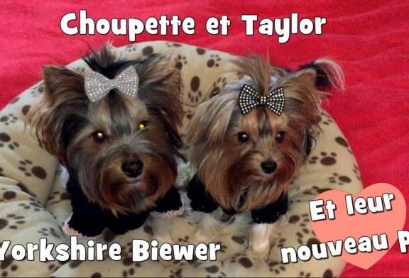Tricot: Choupette et Taylor avec leur nouveau pull