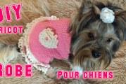 DIY Une Robe pour chiens au tricot