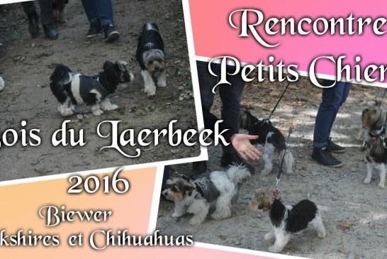 Rencontre petits chiens – Yorkshires Biewer et Chihuahuas 2016