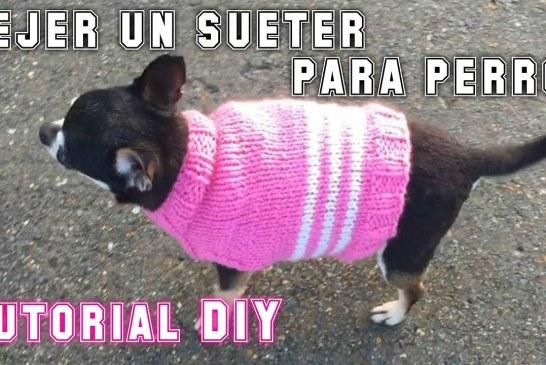 ¿Como tejer un sueter  para perro? Tutorial DIY