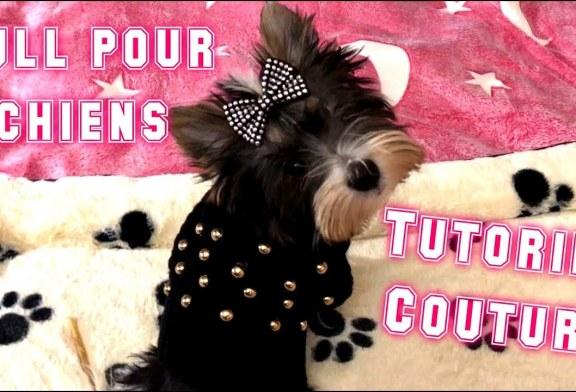 Tutoriel Couture: Comment Faire Un Pull Pour Chiens En 10 Minutes? DIY
